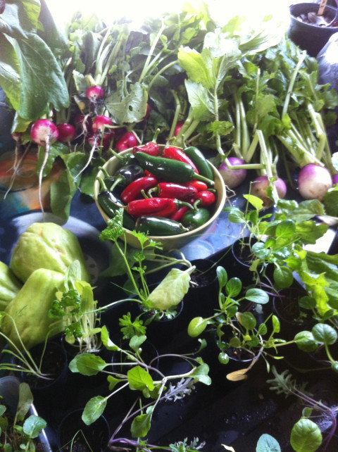 Video: We are Fair Harvest Permaculture